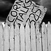 """Cornstalks"" (photography) by Deborah Davis"