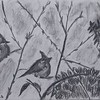 """""""Two Birds in the Bush"""" (charcoal and acrylic) by Clarise Samuels"""