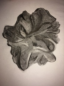 """Scallop' (charcoal) by Anne Bewley"