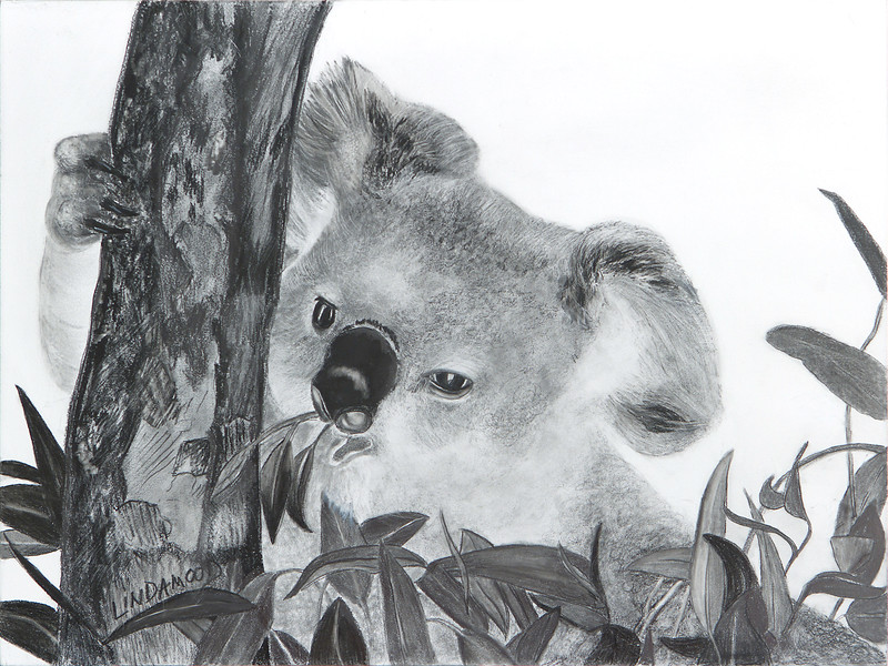 """Koala Treats"" (graphite on cradled board) by Patsy Lindamood"