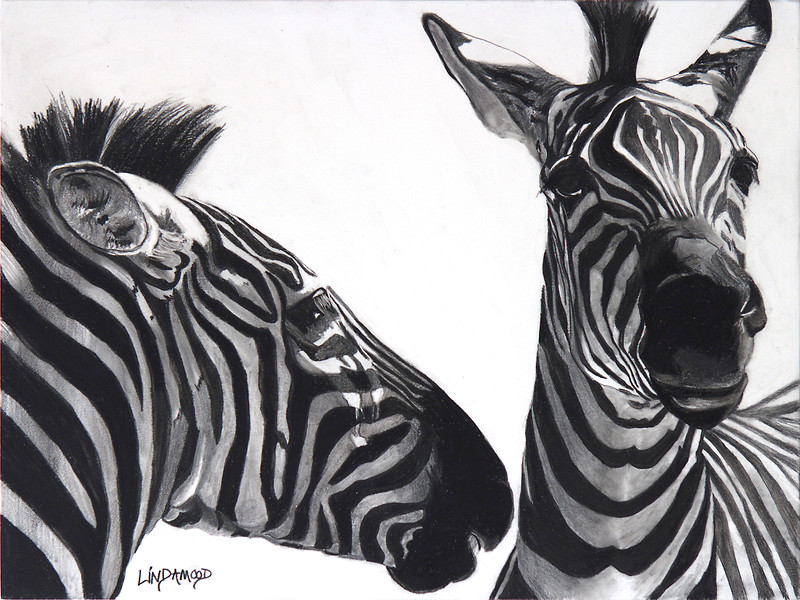"""Zebra Confidences"" (graphite on cradled board) by Patsy Lindamood"