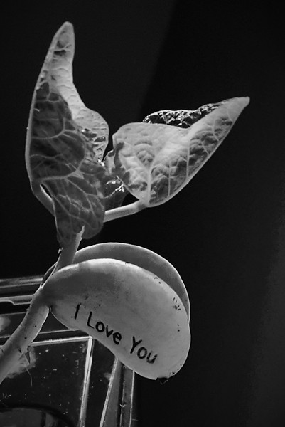 """Love Bean"" (photography) by Carrie Gary"