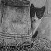 """""""Peek-a-Boo"""" (graphite) by Agnieszka Przyborowski"""