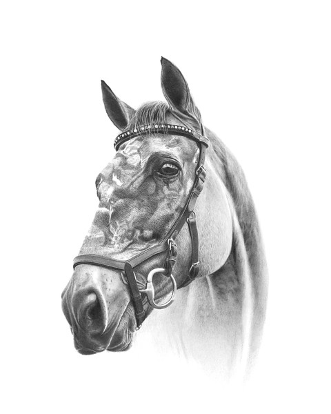 """Corral"" (graphite) by Jim Little"