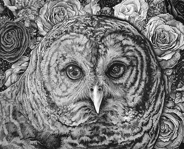 """Hoot Owl"" (pen and ink on clayboard) by Shelby Elizabeth"
