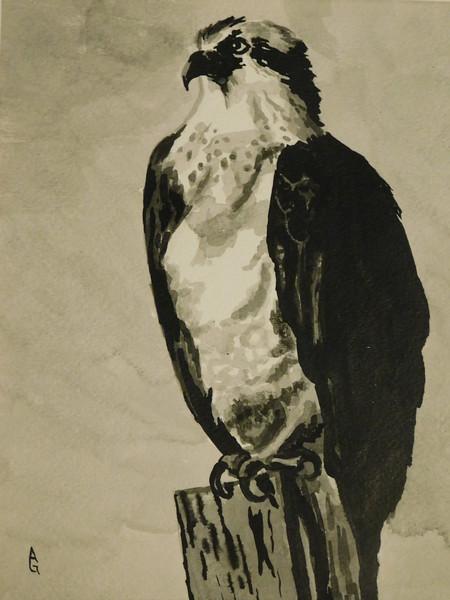 """Osprey Over Captiva"" (india ink) by Ali Graves"
