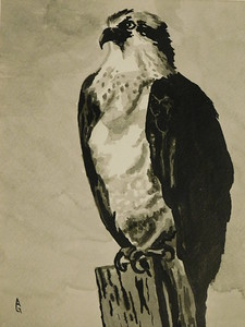 """Osprey Over Captiva"" (india ink) by Ali Graves"