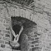 """""""Freebird"""" (graphite) by Agnieszka Przyborowski"""