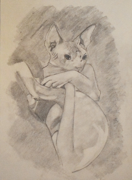 """""""Got Your Tail"""" (graphite) by Kayla Gaudet"""