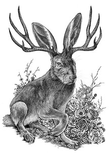 """Jackalope"" (pen and ink on clayboard) by Shelby Elizabeth"