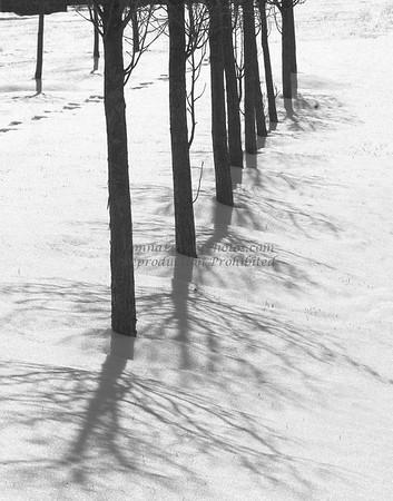 Trees in Snow, Bucks County, PA