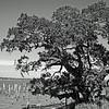 Biloxi Bay.