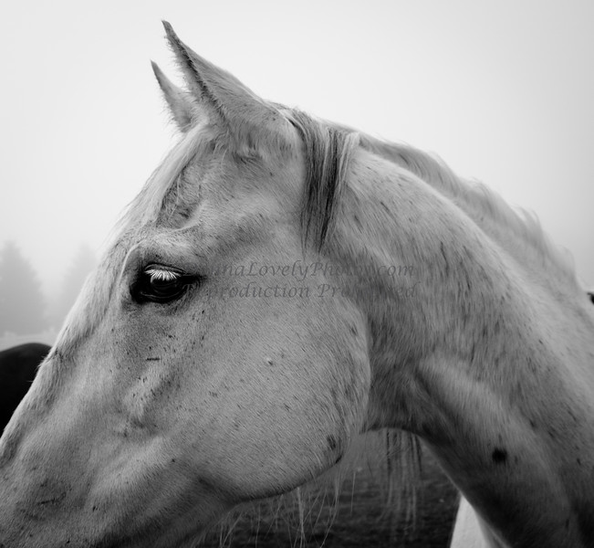 White Horse Head in Fog