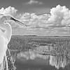 Preserve  Florida's Beautiful big Cypress National Preserve.