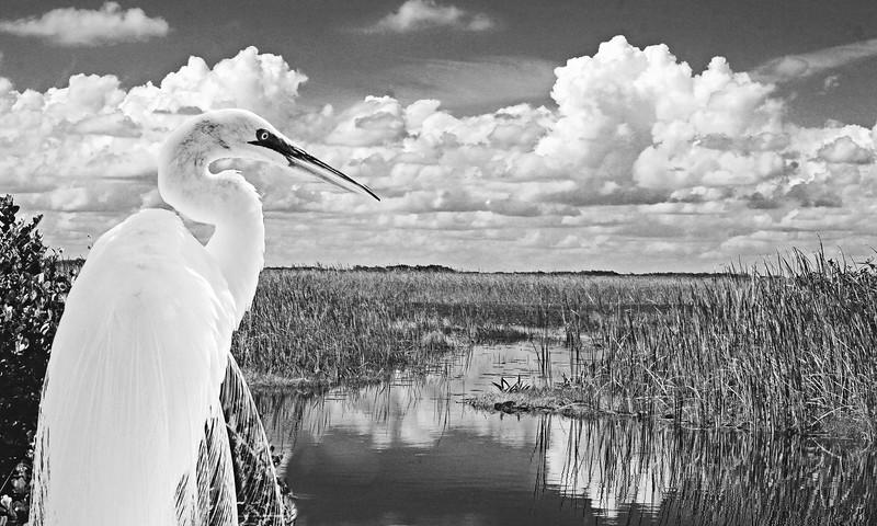 Preserve Florida's Big Cypress National Preserve.