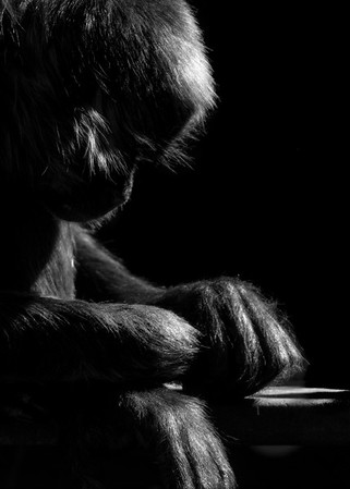 Monkey in Thought