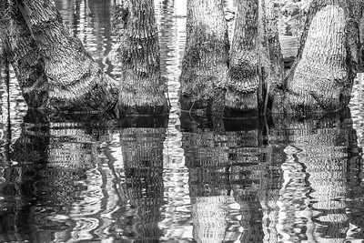 Chain of Lakes / Dora Canal near Leesburg