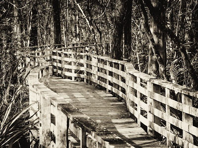 Audubon's Corkscrew Swamp Sanctuary. Naples