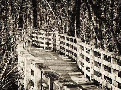 Audubon's Corkscrew Swamp Sanctuary. Naples