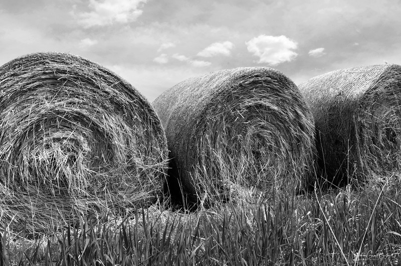 Fairfield Hay Rolls