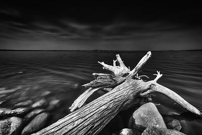 Driftwood 1.0
