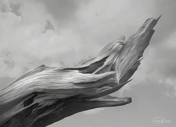 Montgomery Stump 2