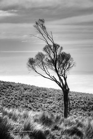 Mt. Pleasant Tree