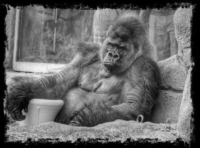 Primate Break Time