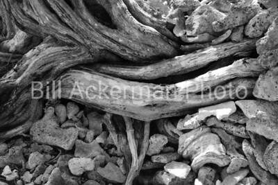 Driftwood and Coral, Roatan, Honduras