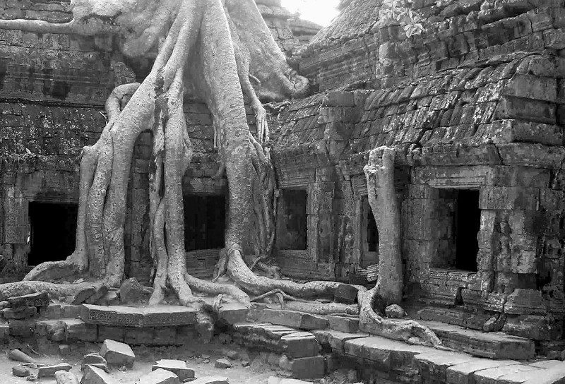 Giant Ficus Tree in Ta Prohm