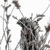 Image #1 Desert Sonora Cactus