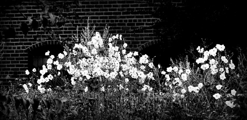 Black and White Revise Project Image #4 Cranbrook Infirmary Garden