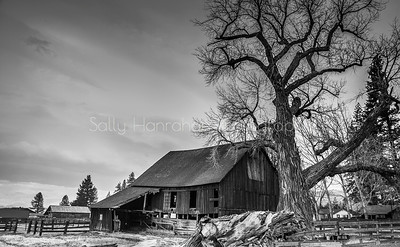 Franktown Barn #1 ~ Washoe Valley, Nevada