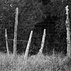 Five Posts in Monochrome