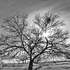 Icy Tree in Black & White