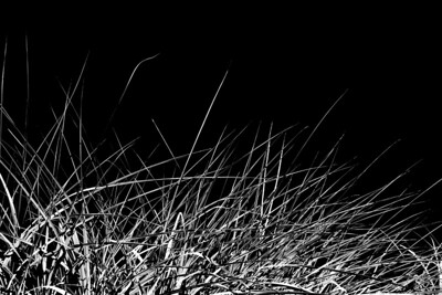 Beach grass at dusk