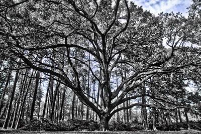 Greenfield Lake tree