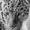 Intense Eyes<br /> Minneapolis Zoo