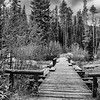 Bridge over String Lake<br /> Grand Teton National Park