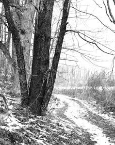 Tree at Menden Ponds Park -   Scanned from medium format film