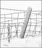 Snowy Langbank - 14 January 2021