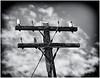 Telephone Pole on Wee Cumbrae - 13 June 2021