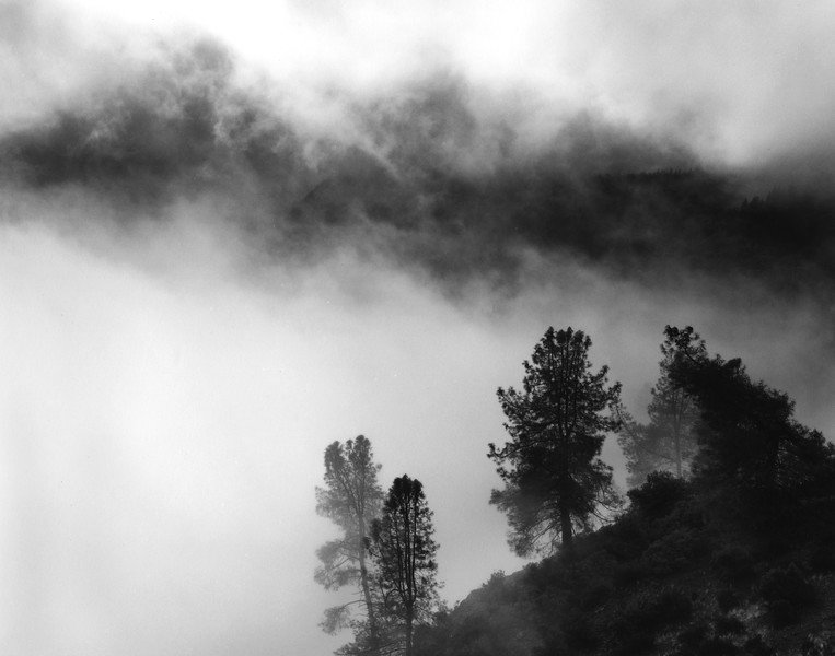 Trees and Clouds, American River Canyon