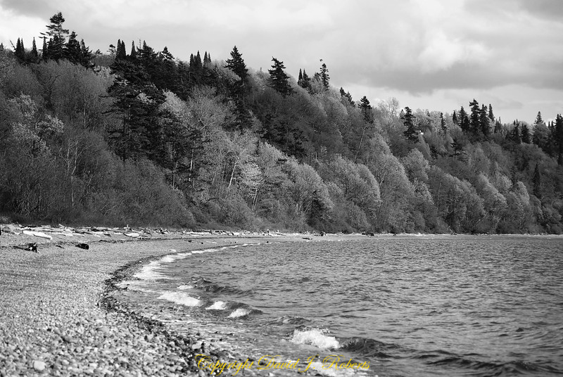 Beach and interesting textures of trees along the shore near Cherry Point, Washington.
