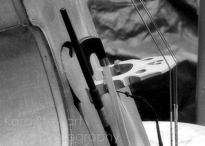 Bass Black and White