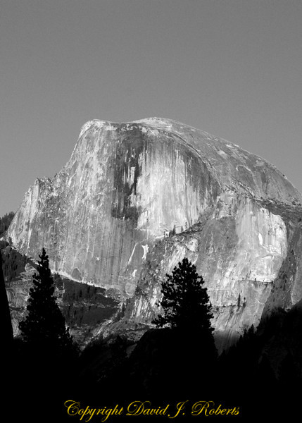 Half Dome from valley bottom, black and white, Yosemite National Park, California