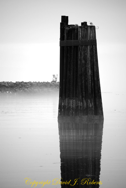 Pilings in the fog at the Keystone Ferry landing, Whidbey Island, WA