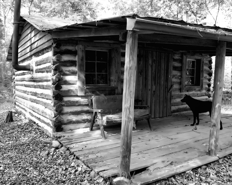 Dog and Cabin