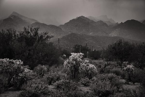 Foggy Desert