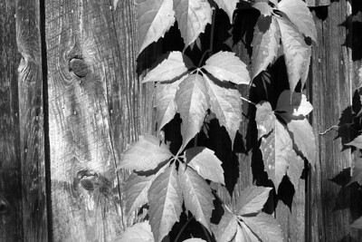 Leaves and Wood